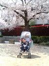 Hiromichi_20080405urakazepark